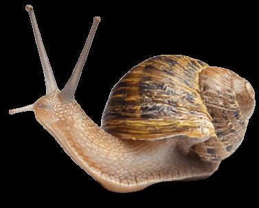 snail farm waar te koop